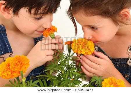Attractive 6 and 7 year old french american kids smelling flowers together.