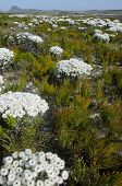 picture of fynbos  - View of the Eastern Cape of South africa - JPG