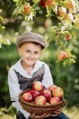 Boy With Apple In The Apple Orchard. Child Eating Organic Apple In The Orchard. Harvest Concept. Gar poster