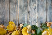 Fallen Yellow And Green Leaves On Distressed Rough Grey Wooden Background. Autumn Flora Nature And B poster
