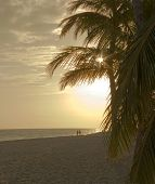 stock photo of beach sunset  - Palma on a beach - JPG