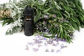 image of essential oil  - Rosemary and other mediterranean herbs with bottle of essential oil - JPG