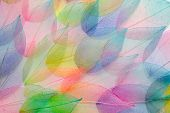 Colored Leafs. Leaf Texture Pattern. Macro Leaves Background Texture. Floral Design. Leaves. Rainbow poster