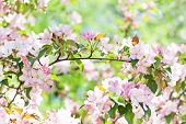 Cherry Blossom Spring Time Sunny Day Garden Landscape. Blossoming Pink Petals Fruit Tree Branch, Ten poster