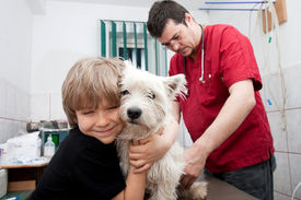 foto of westie  - Little boy holding his Westie while the veterinarian is preparing to give a vaccine - JPG