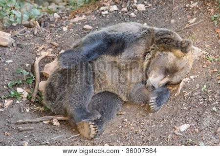 bear sleeping under a tree in the woods