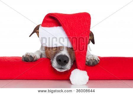 Navidad perro Santa Baby