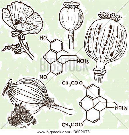 Ilustración de narcóticos - amapola y opio