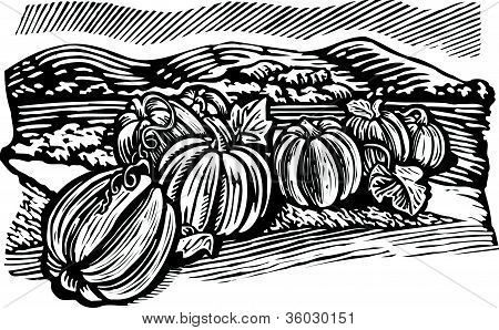 Pumpkin Patch; Black And White