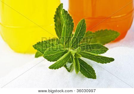 Stevia Rebaudiana, Support For Sugar