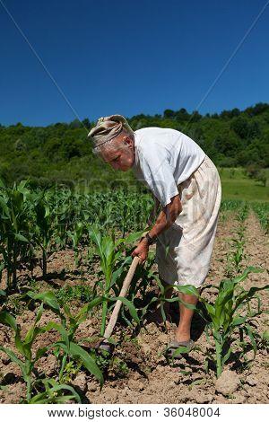 Senior Rural Woman In The Corn Field