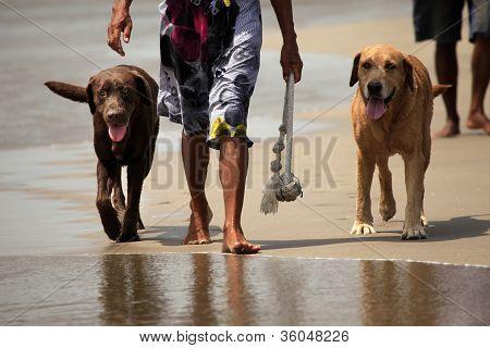Walk On A Beach
