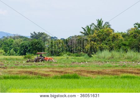 Plowing With The Tractor
