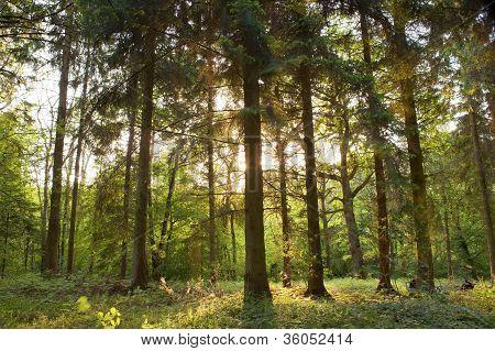Springtime forest