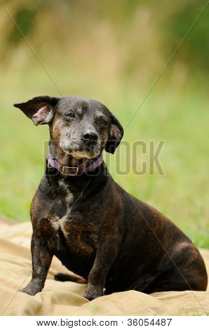 Dog On The Green Grass