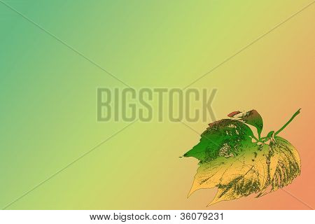 Autumn leaf on colorful background