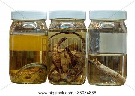 Science Specimens