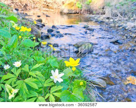Spring Flowers Near Wild Mountain Brook