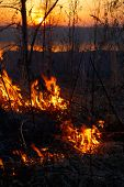 picture of novosibirsk  - Fire in siberian forest near Novosibirsk Russia