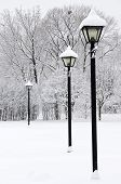 foto of winter scene  - Winter park covered with fresh white snow - JPG