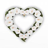 Постер, плакат: A красиво сердца кадр Белые каллы цветок лилии изолированные на белом фоне