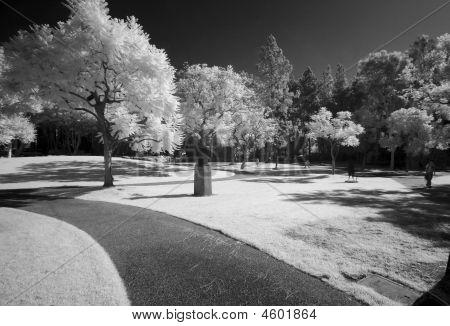 Murphy Sculpture Garden Infrared