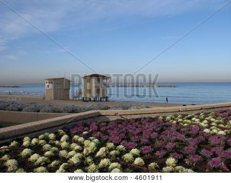Beach Of Mediterranean Sea Intel Aviv Israel