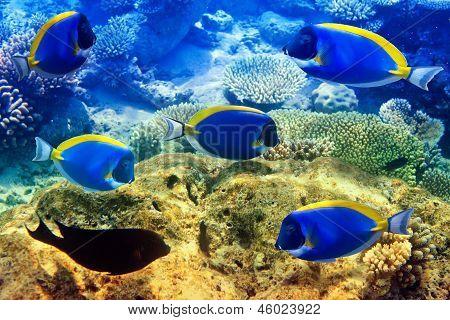 Indian ocean. Underwater world