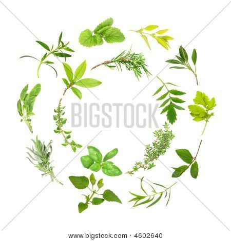 Herb Leaf Circles