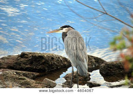 Um pássaro selvagem na margem de um rio