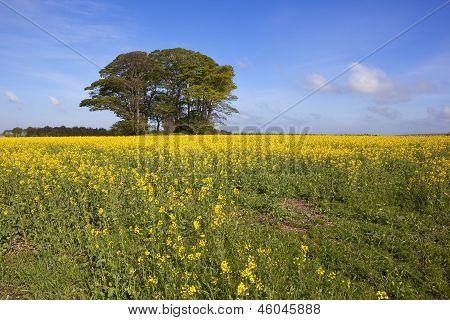 Golden Farmland