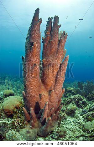 Underwater Coral Reef Pillar Coral