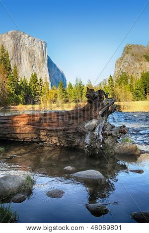 Fallen tree in the Merced river with El Capitan and the Yosemite Valley in the background.