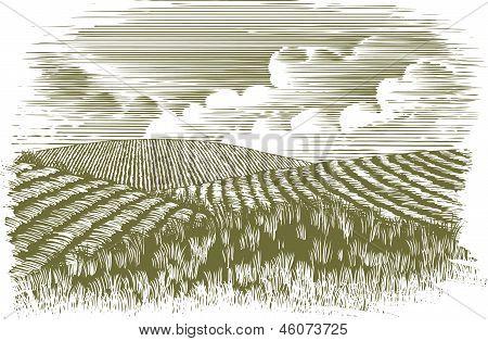 Woodcut Farm Fields