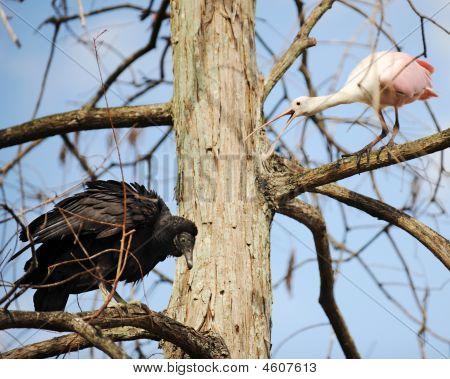 Get Outta' My Tree!