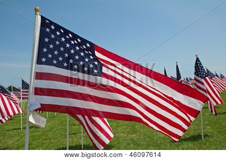 An American Flag Waves among a Field of Flags during Memorial Day