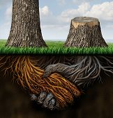 picture of split ends  - Broken partnership problems as two trees with roots shaped as a business handshake with one tree cut down and the root rotting as a concept of a lost or canceled contract and partner disagreement - JPG