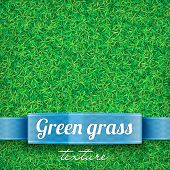 stock photo of grassland  - Green grass background - JPG
