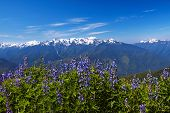 foto of olympic mountains  - Hurricane Ridge Olympic National Park Washington USA