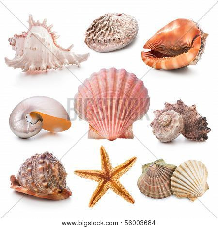 Seashell Kollektion