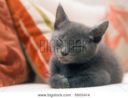 Cute Grey Kitten Asleep On A Sofa