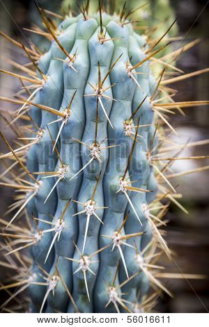 Close Up Of A Cactus With Yellow Prickles