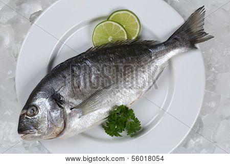 Frischfisch Goldbrasse auf einem Teller