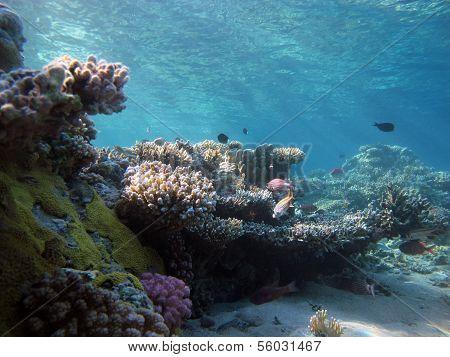 Sunny reef