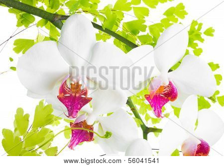 Branches Of An Orchid And Fern Are Isolated On White A Background
