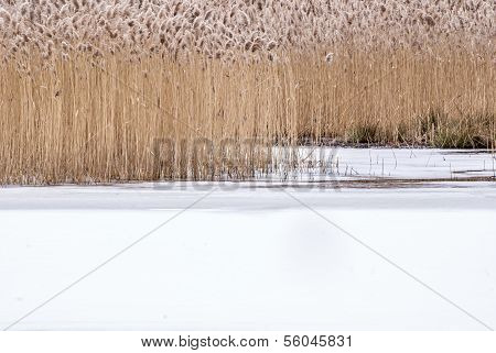 Winter Swamp Background