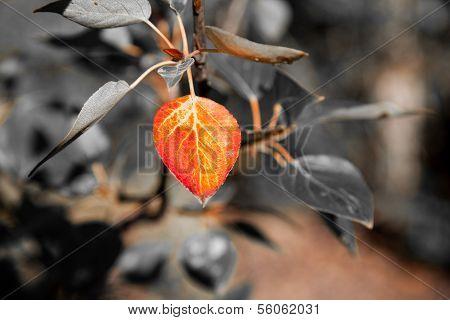 Leaf On Fire