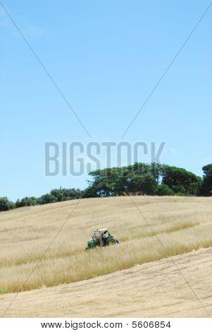 Tractor campo cosecha de trigo