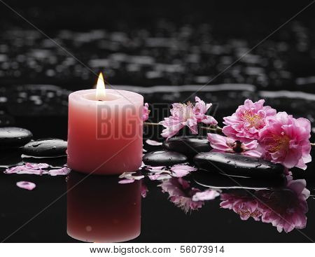 Still life with pink cherry sakura  and pink candle