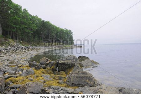 The Rocky Coast Of Maine